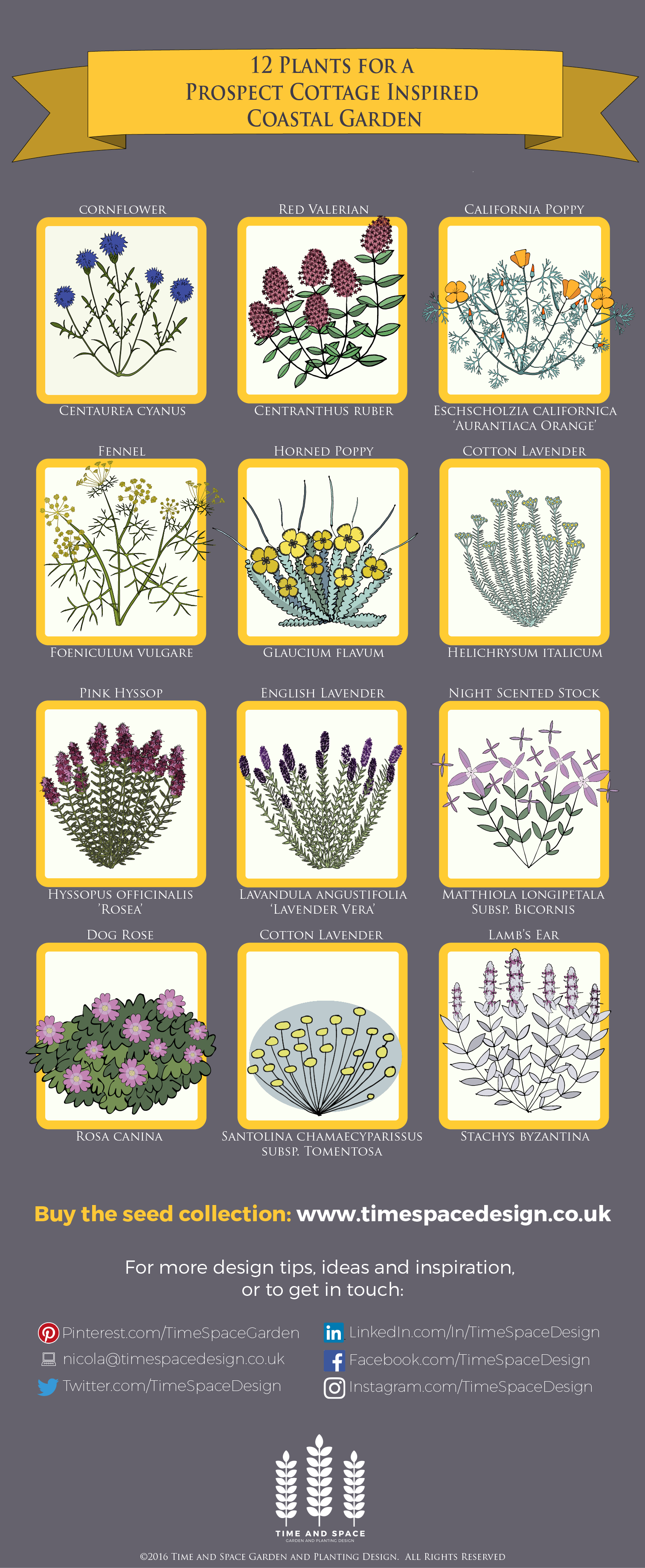 12 Plants for a Prospect Cottage Inspired Coastal Garden