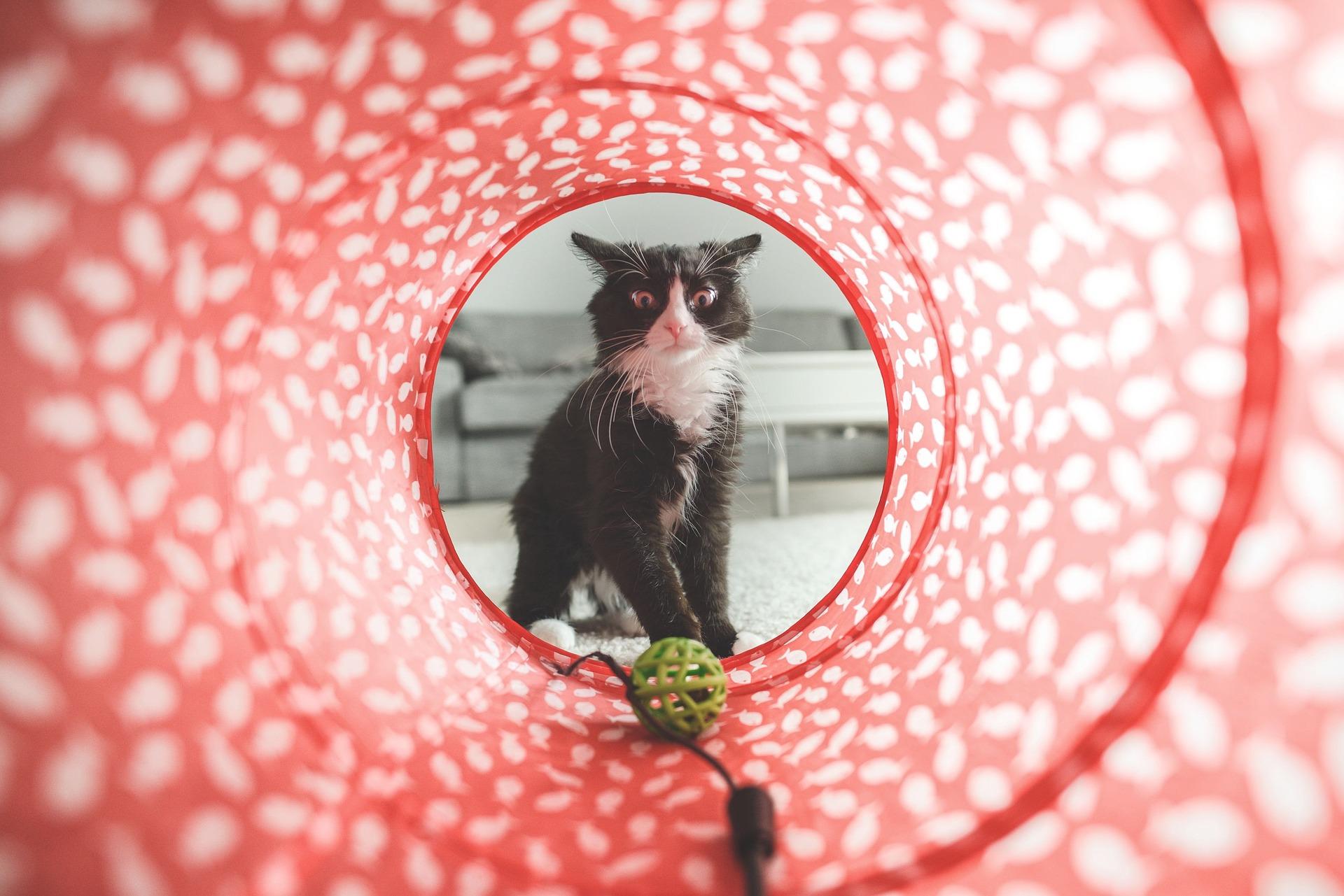 cat-932846_1920.jpg