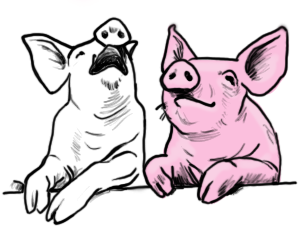 Pigs_transparent background.png
