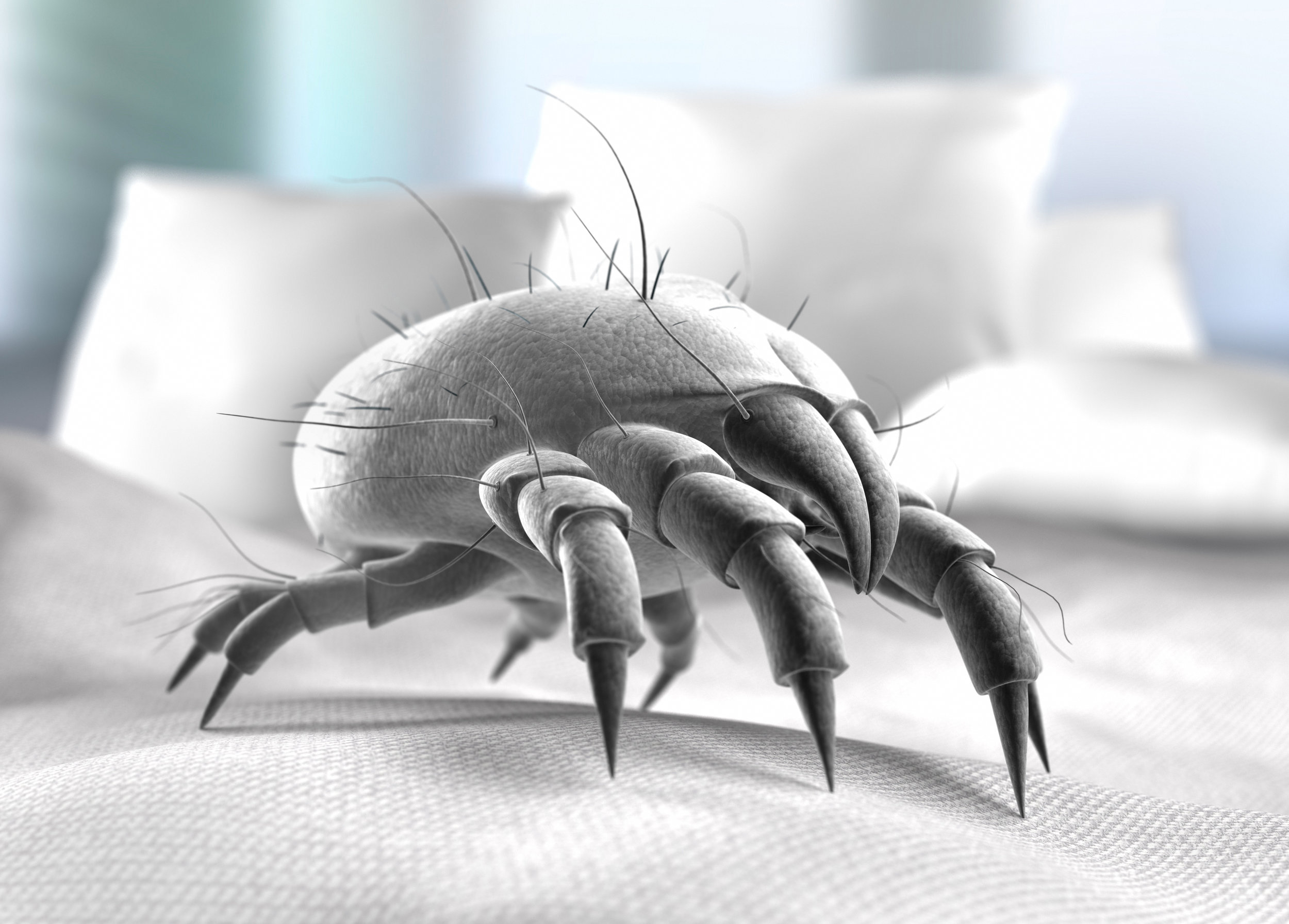 Why Dust Mites are in our bed?