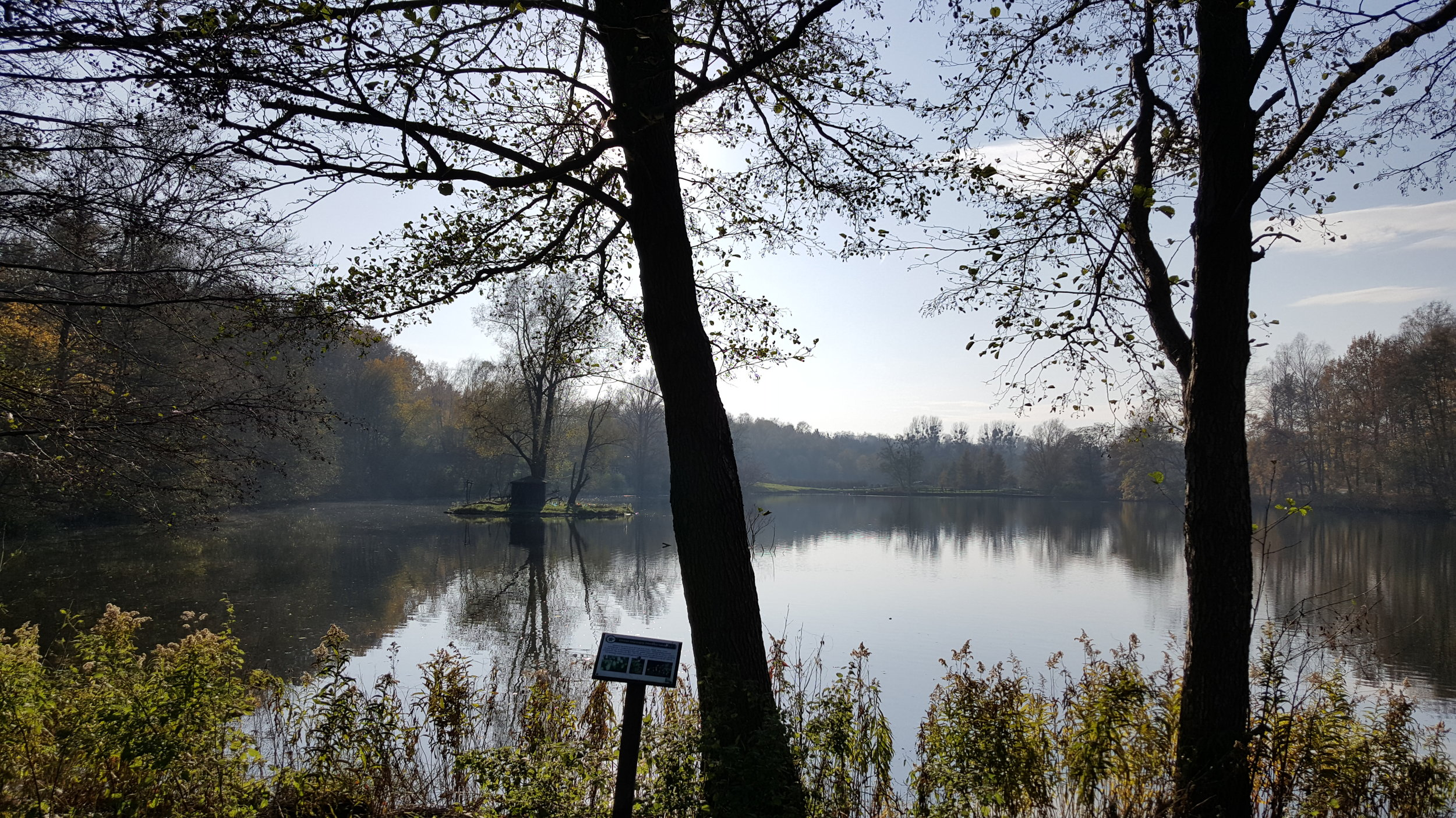 zoo lake nov.jpg