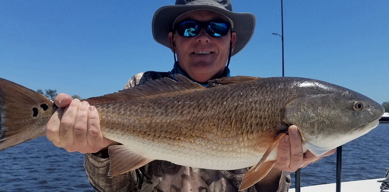 Large Bull Redfish caught by Captain Don Taylor