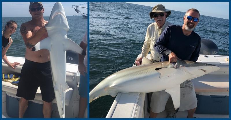 huge shark catches off of Jacksonville