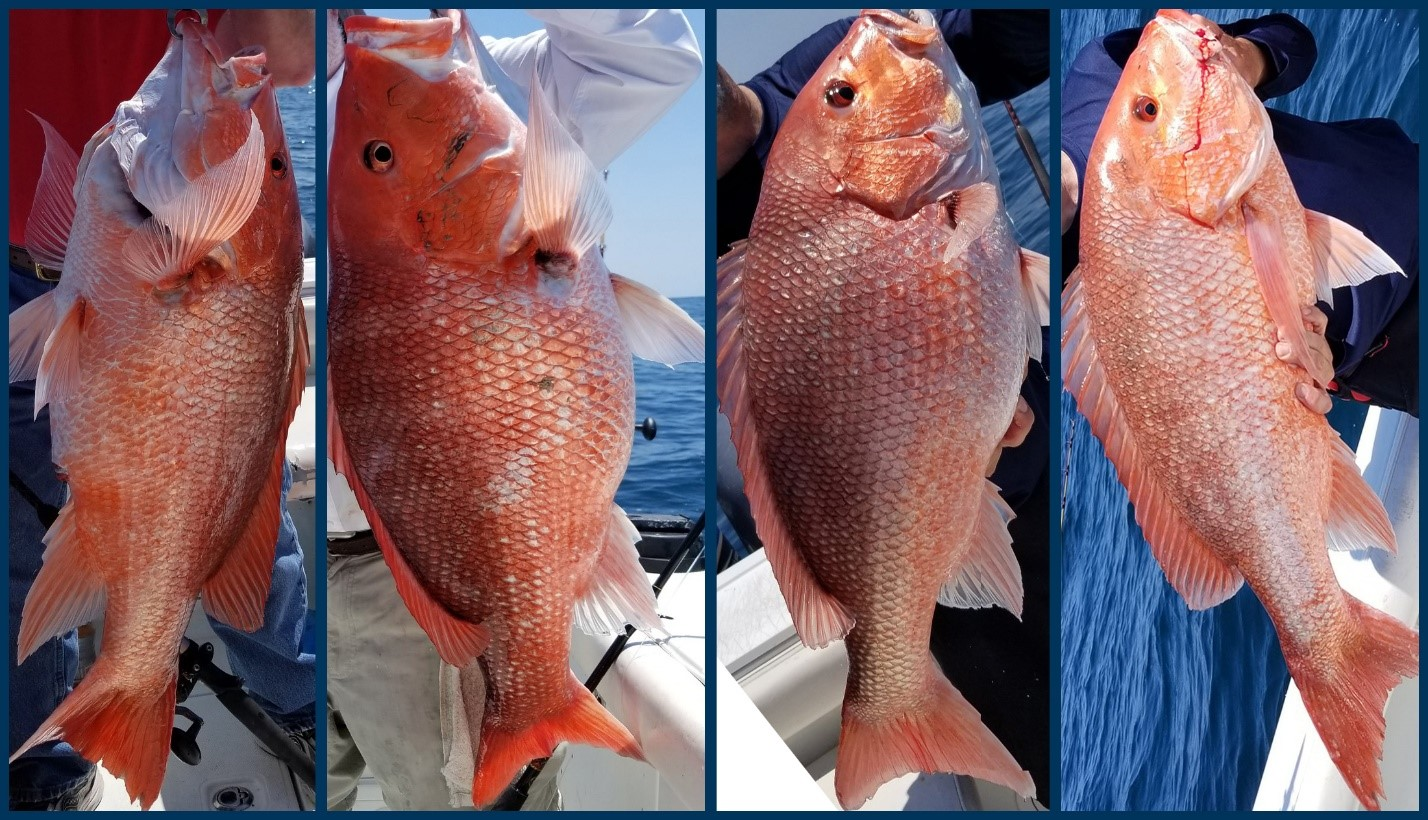 red snappers by Captain Buck Rogers