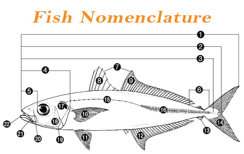 Identify Florida Fish - Fish Nomenclature
