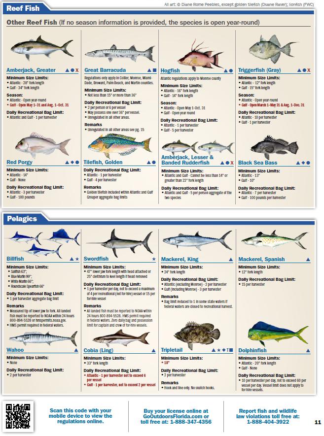 FL Saltwater Fishing Regulations - 2