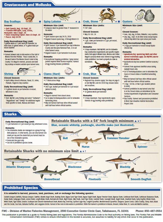 FL Saltwater Fishing Regulations - 4