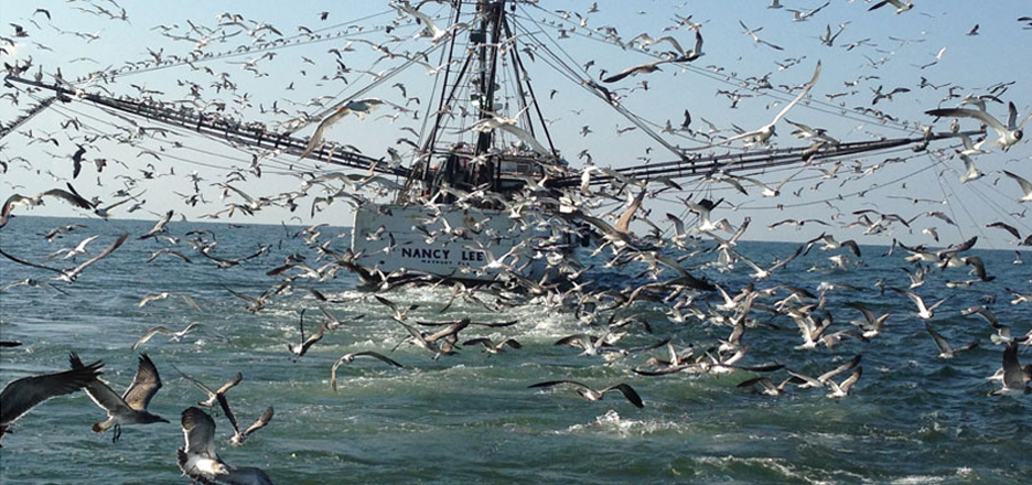 shrimp boat with tons of birds