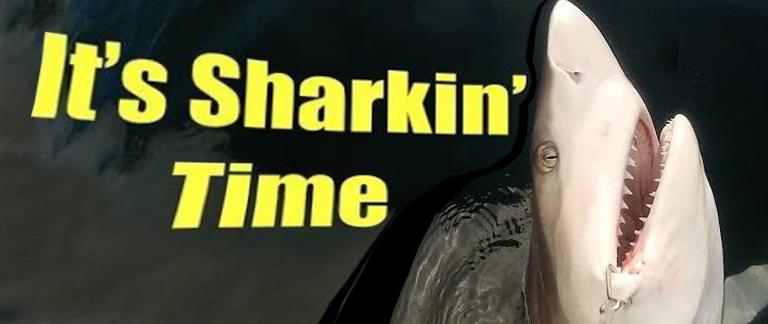 Shark time text overlay on a jumping shark photo