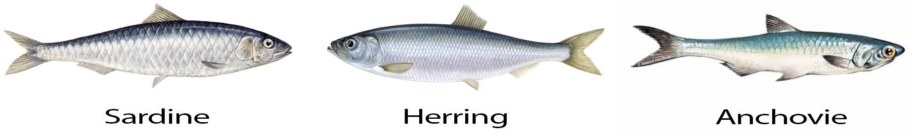 3 types of fish: Sardines, Anchovies, Herrings