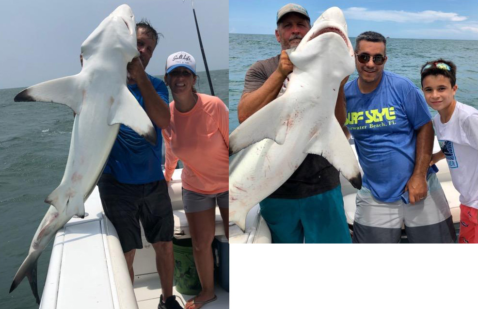 large sharks caught in Jacksonville