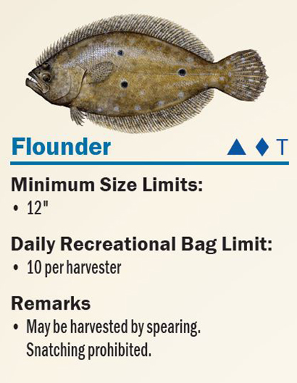 flounder photo from fwc