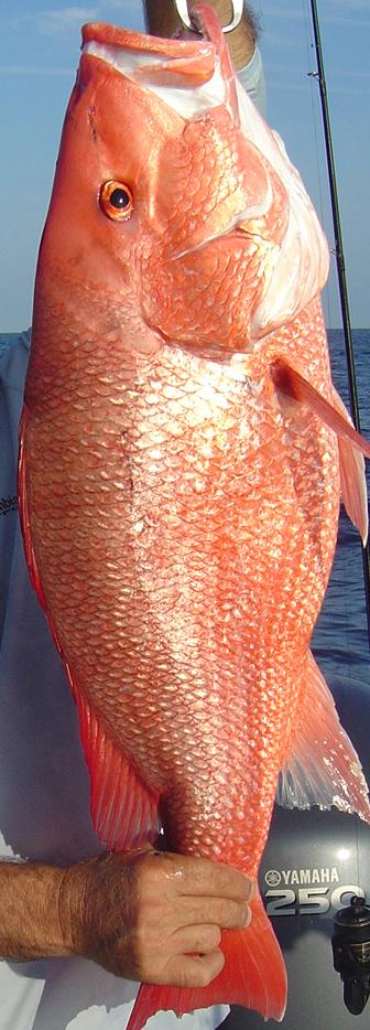 red snapper in Jacksonville