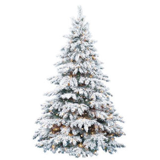 Types Of Christmas Trees.What Are The Different Types Of Christmas Trees 1000bulbs