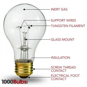 bulbs-anatomy-4-300x300