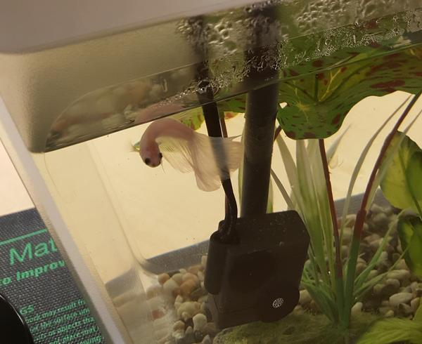 A happy Edison enjoying his tank.