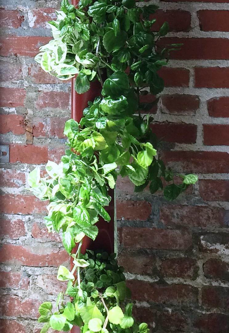 Aergrow post with Greenery plants