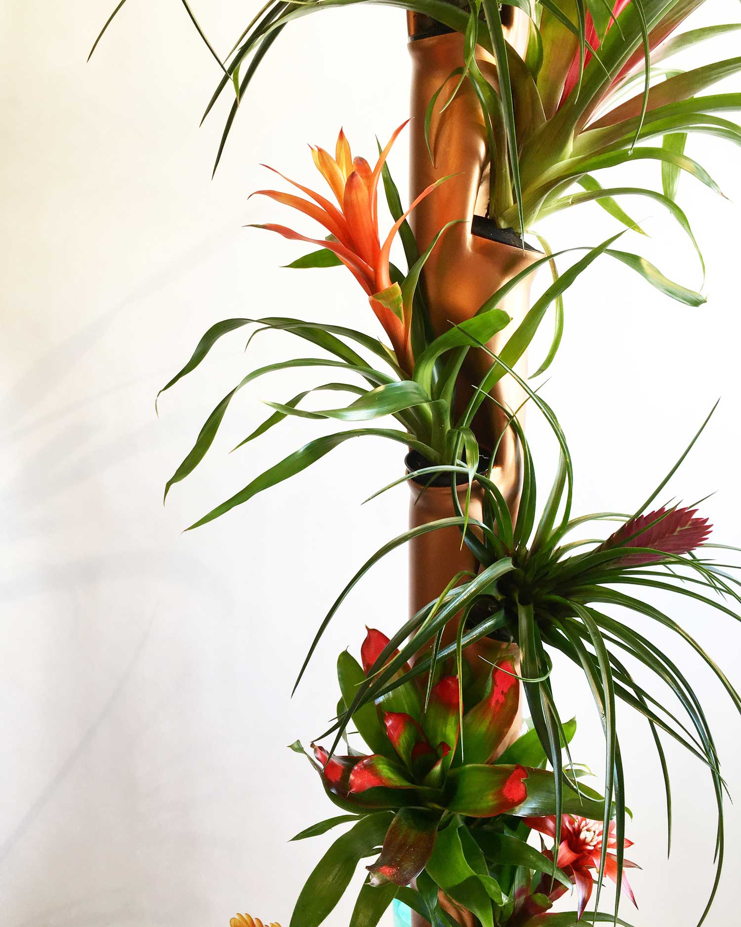 Aergrow post with Tropical plants