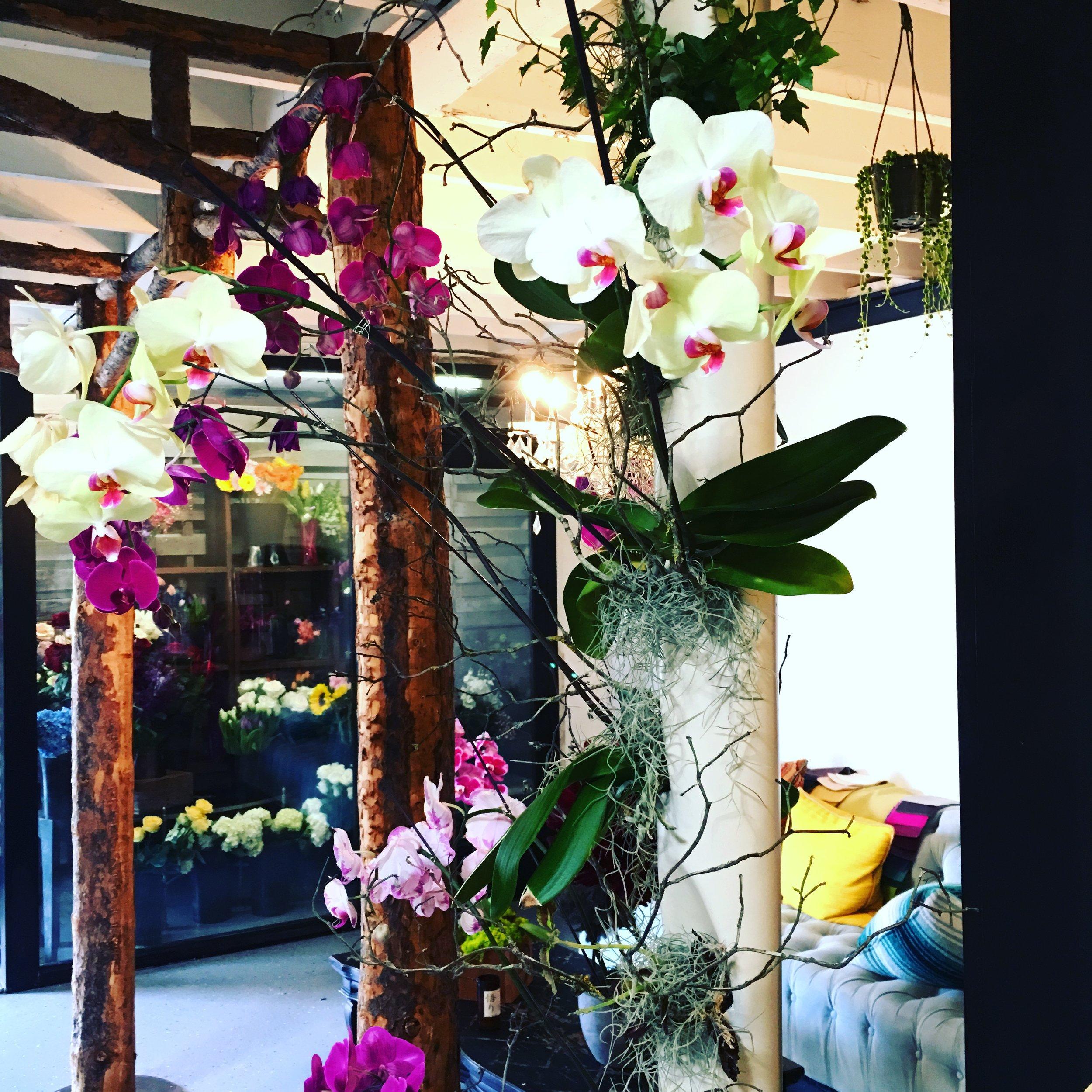 OrchidPostatMagicalBlooms.JPG