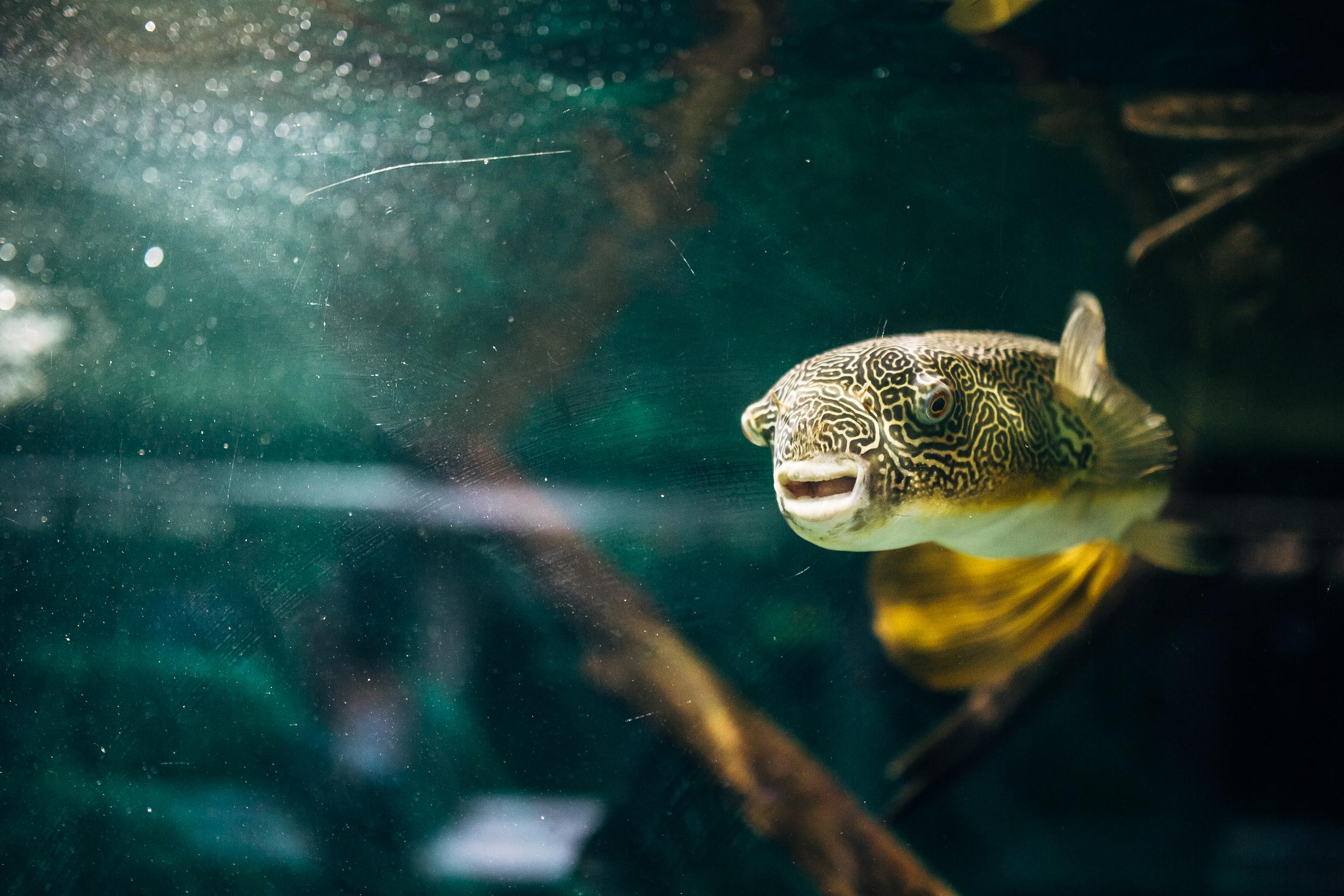Belle Isle Aquarium, Fish Friends