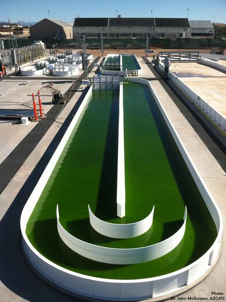 algae-pond-azcati