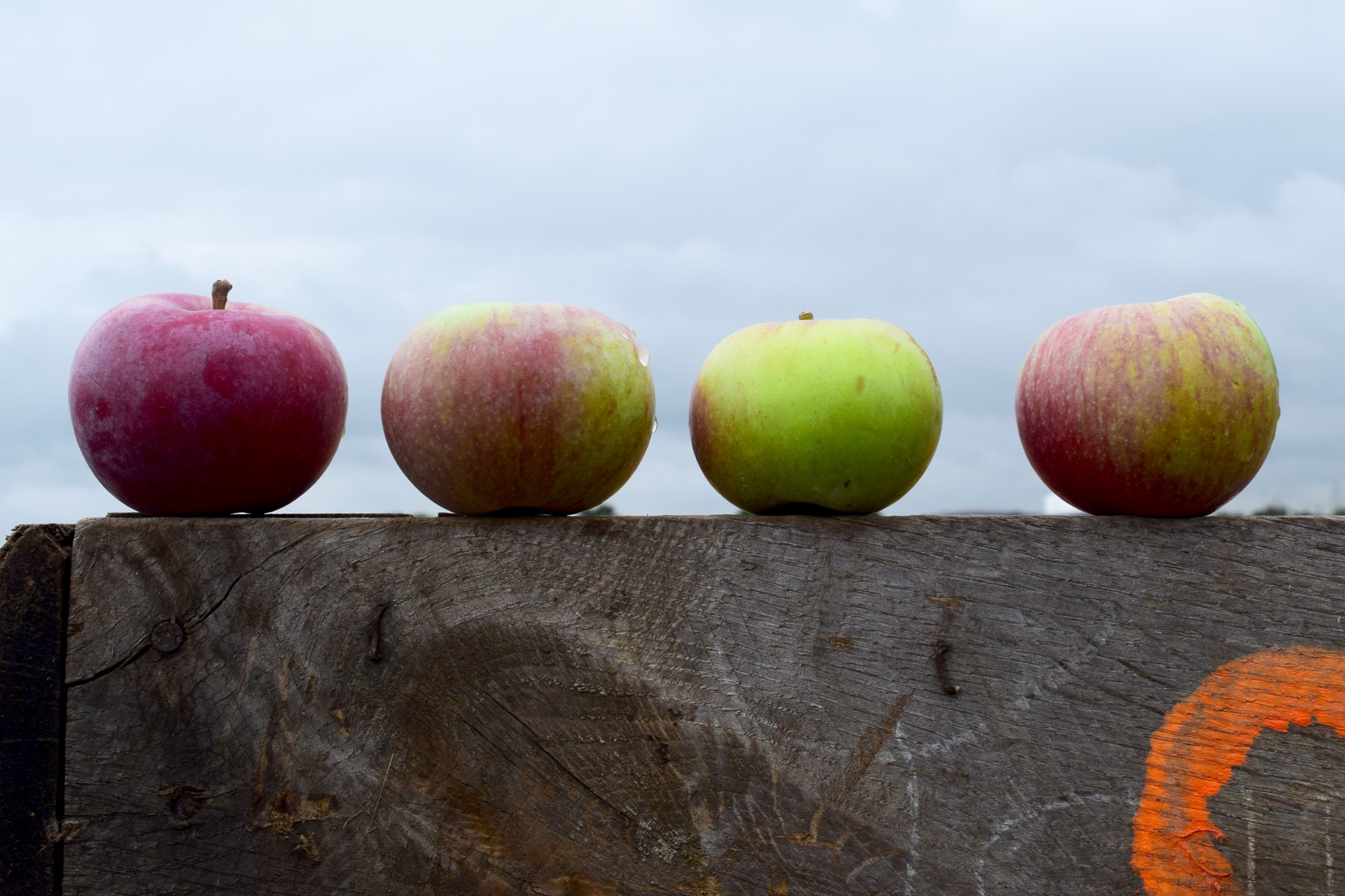 Apples for cider are wonderfully diverse. It's this variety that lends to the complexity and depth of our ciders.