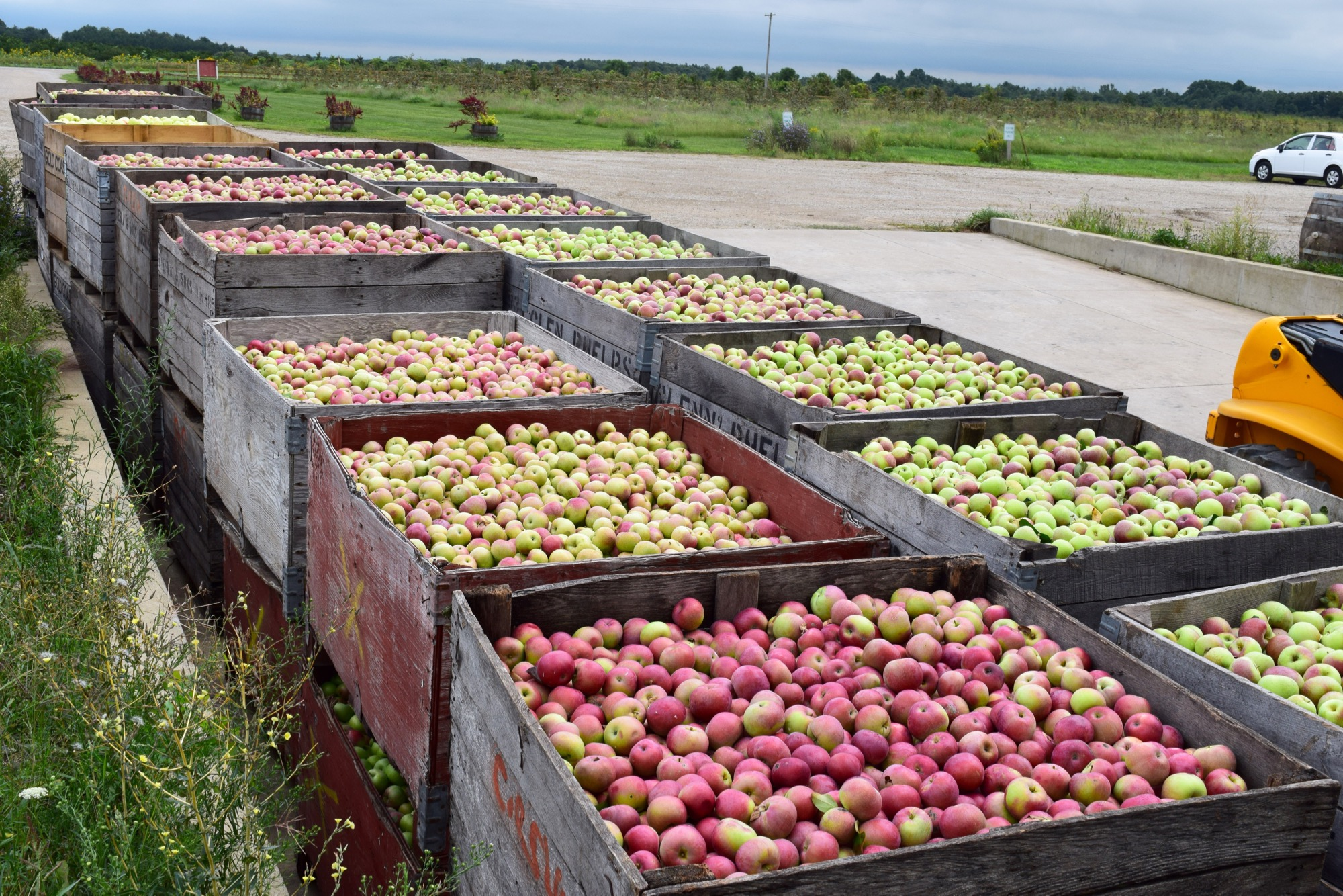 The subtle aroma of fresh apples permeates the air, and it hits you before you see the apples.
