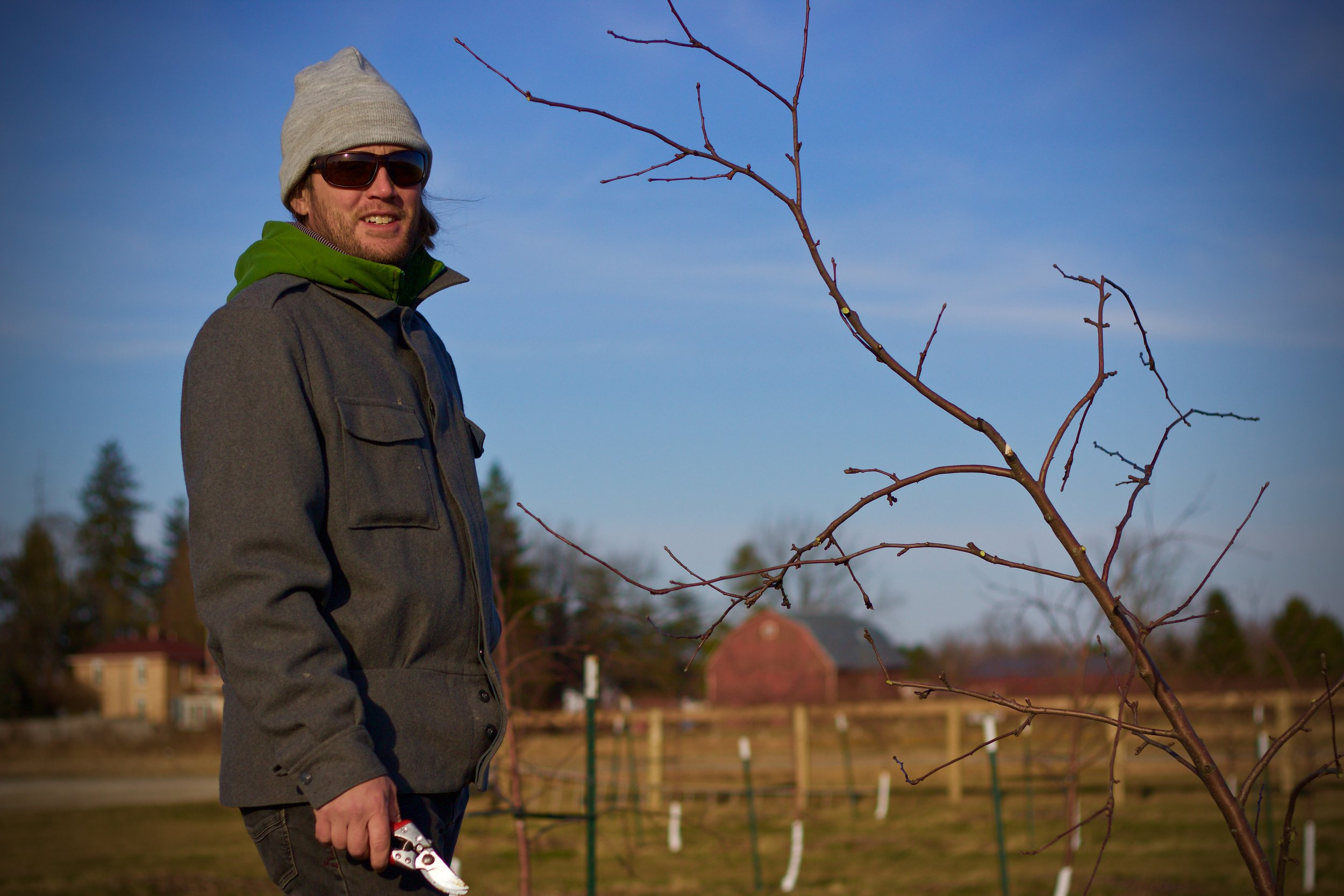 Virtue Cider Agricultural Director Ryan Beck pruning our young apple trees.
