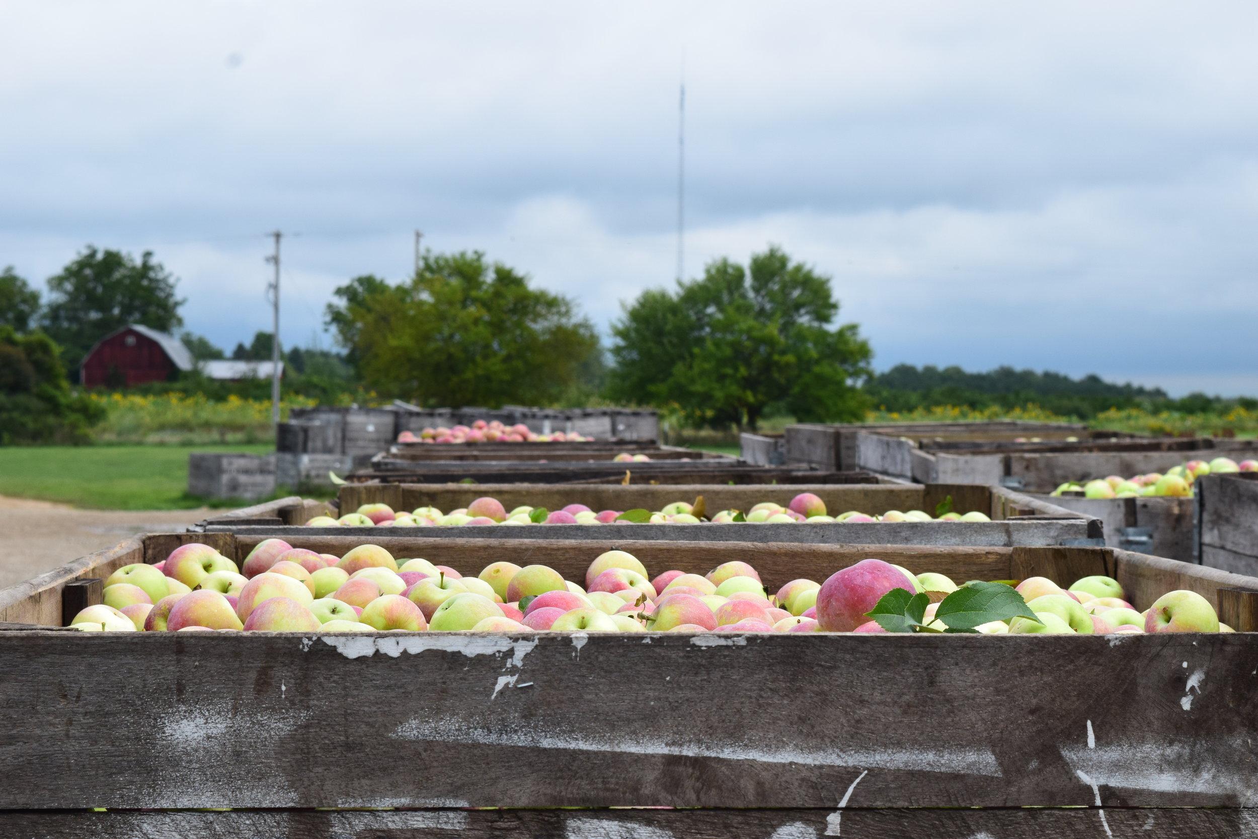 Miller Fruit Farm