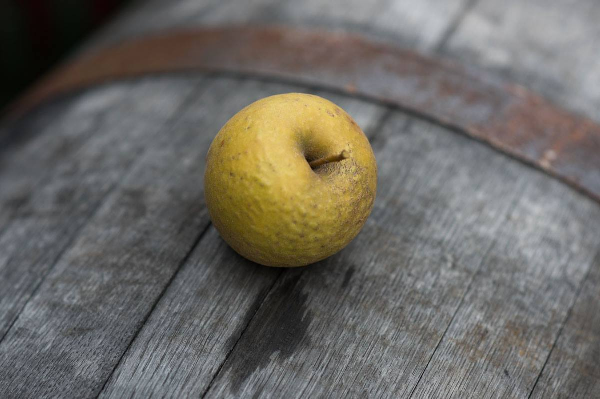 apple barrel.jpg