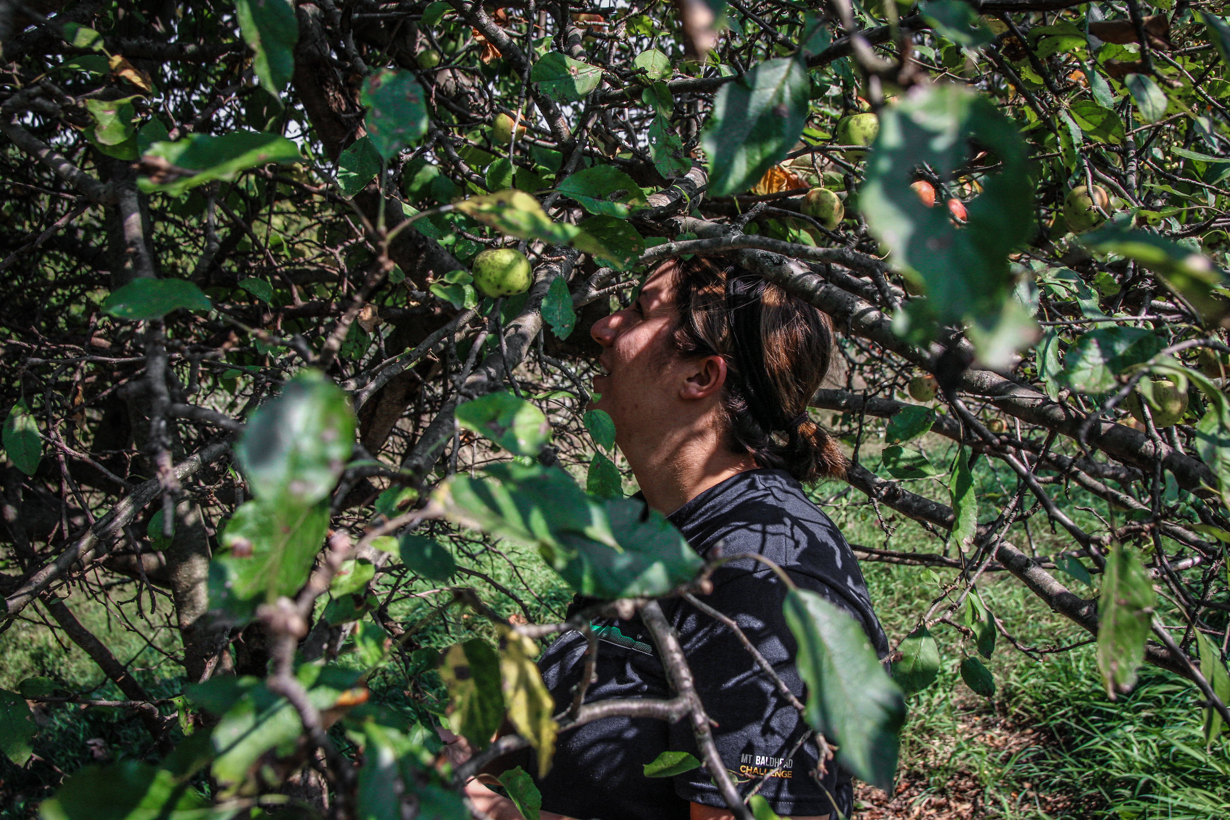 farm apples-6.jpg