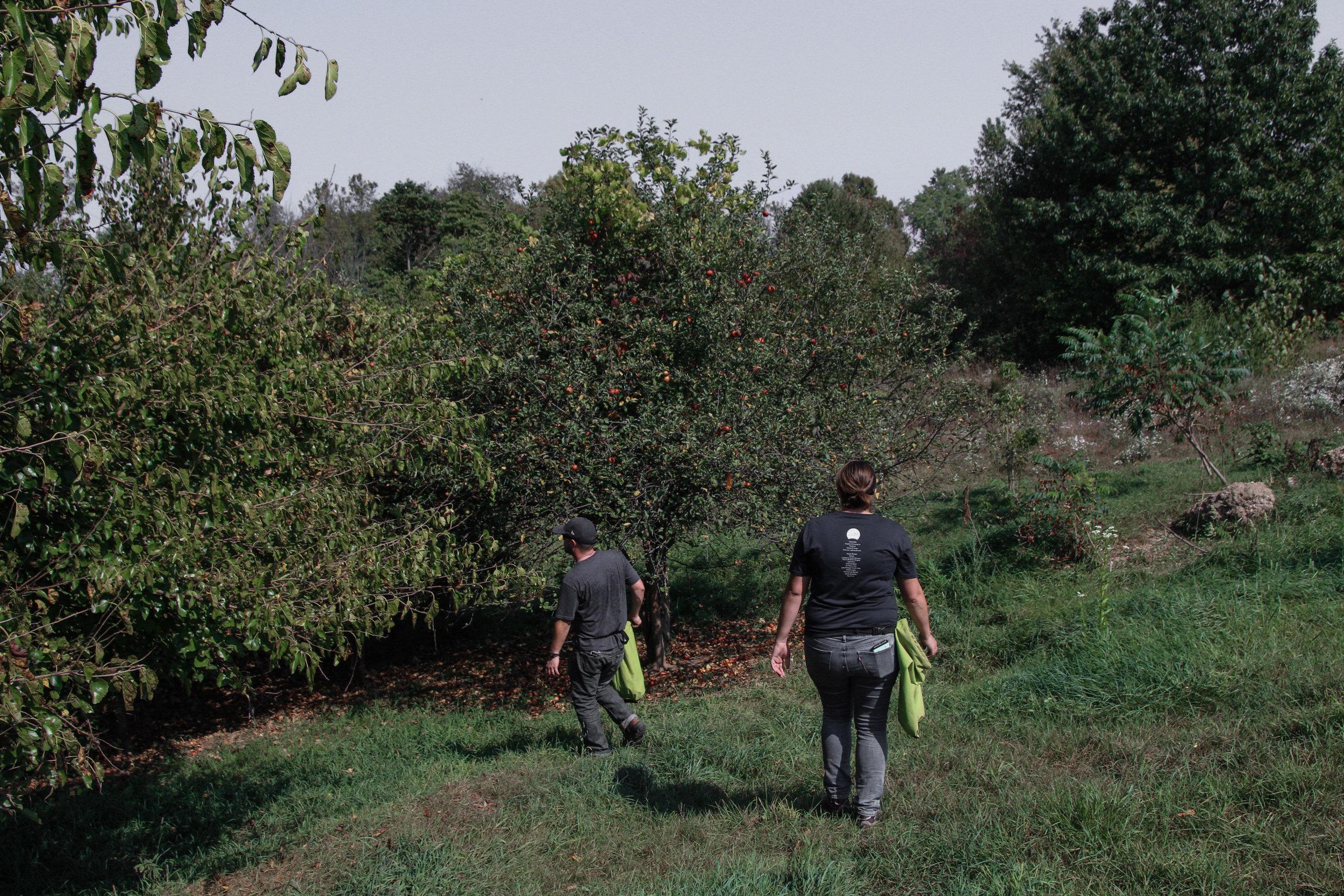 farm apples-5.jpg