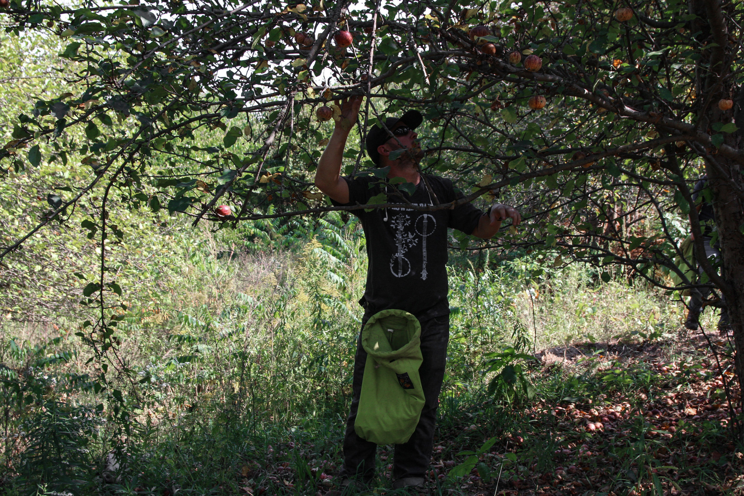 farm apples-2.jpg