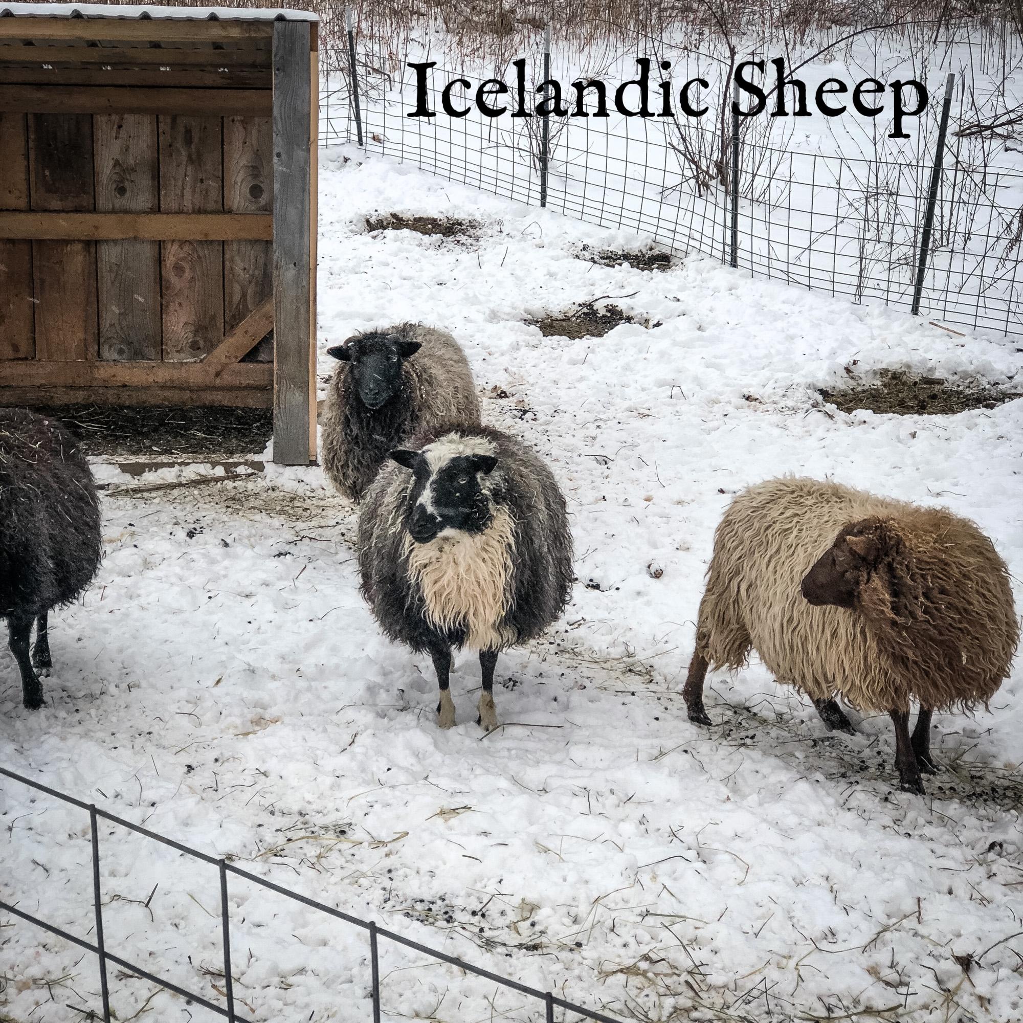 winter animals-2.jpg