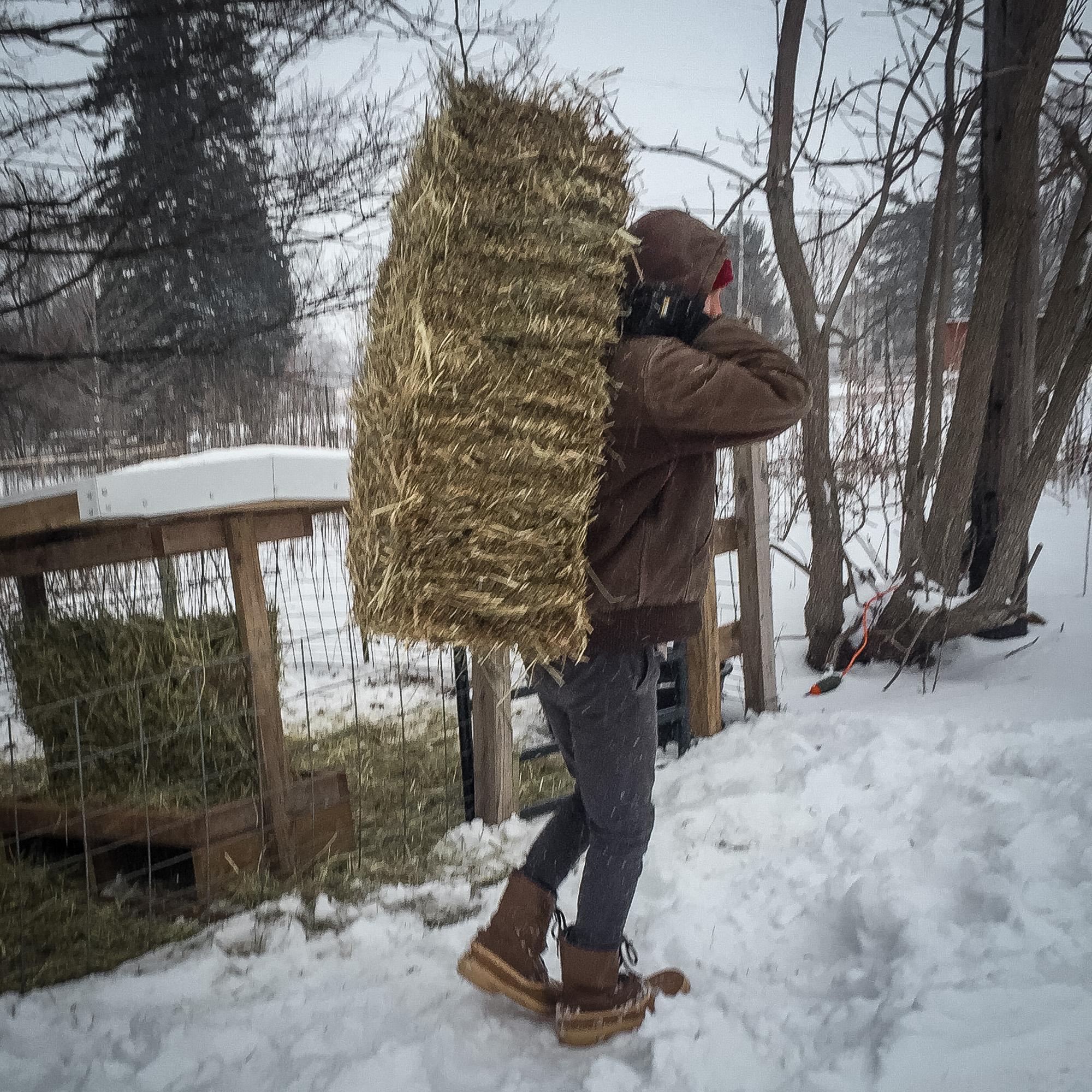 winter animals-6.jpg