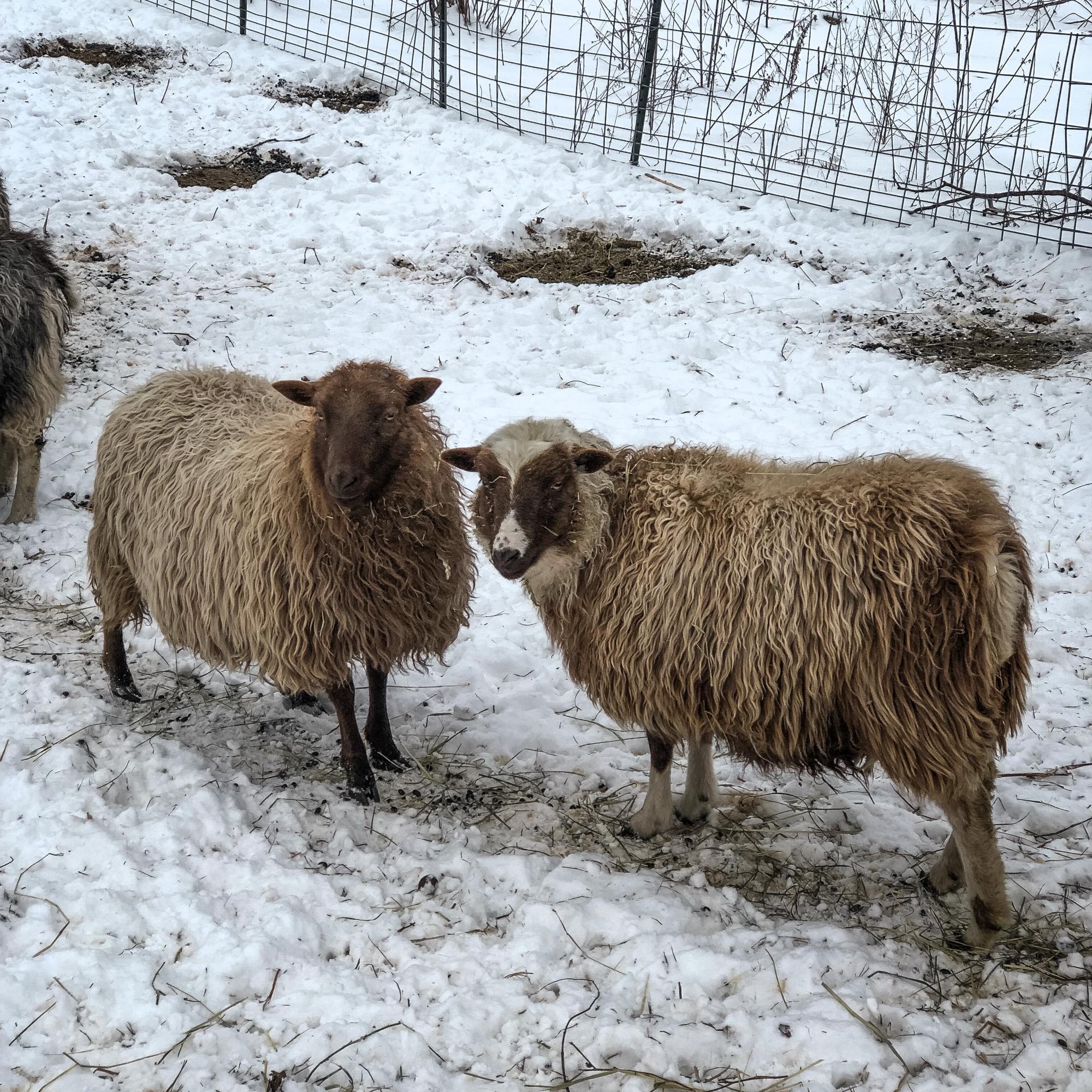 winter animals.jpg