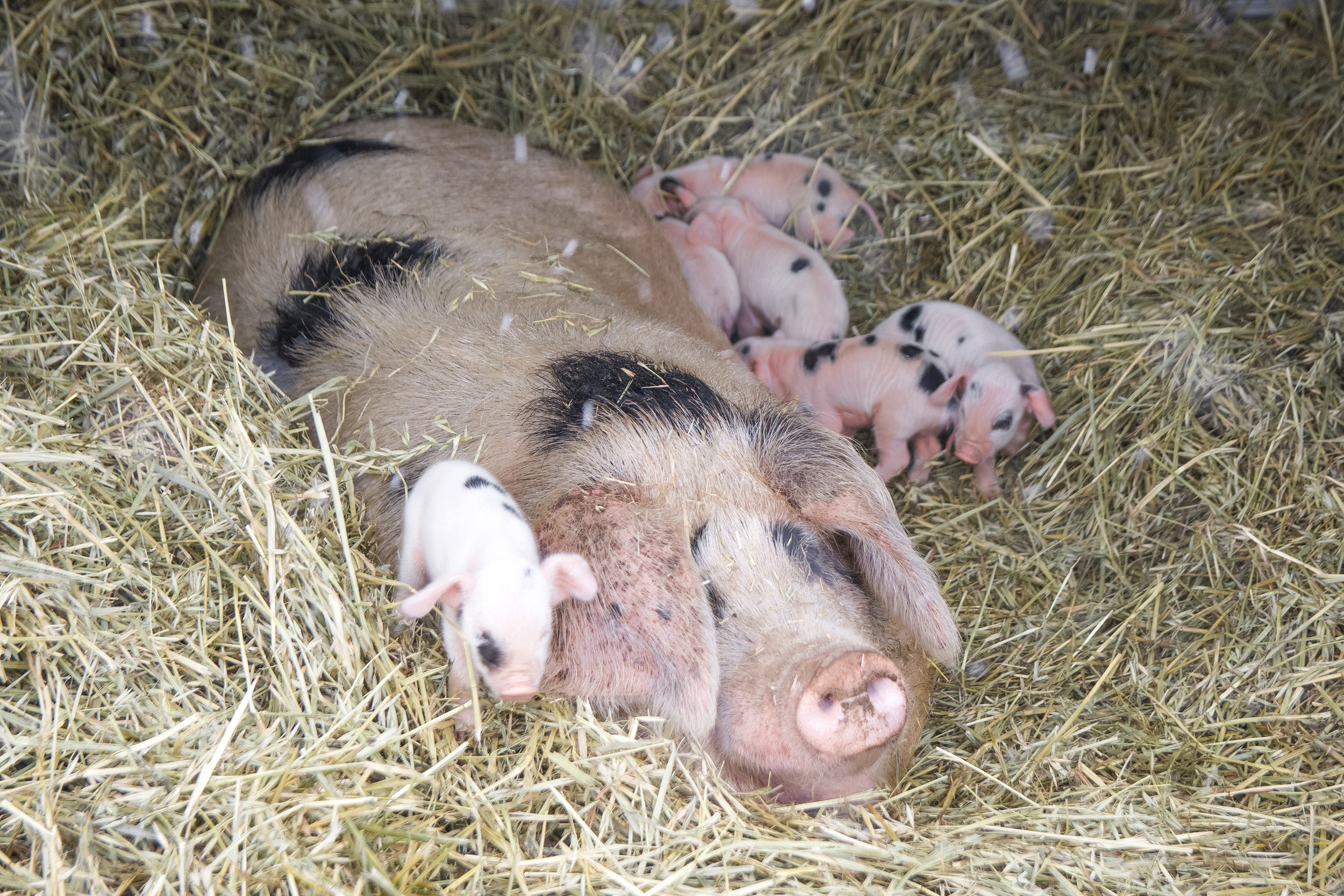 baby animals-2.jpg