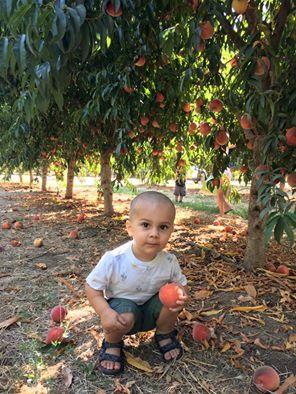 Peaches Olie.jpg
