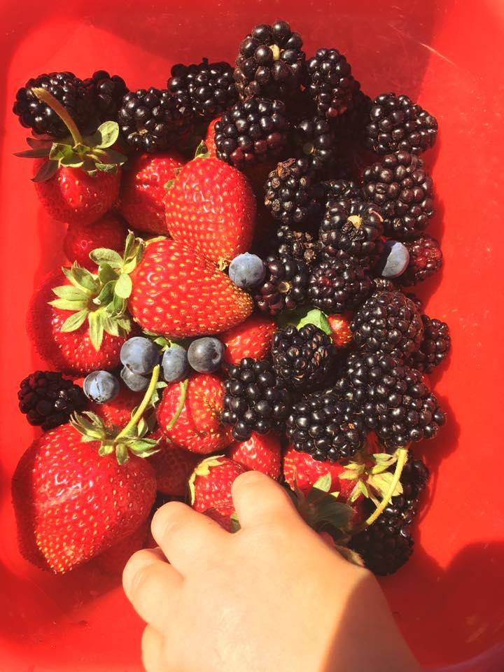 Fruit Picking Fruit.jpg