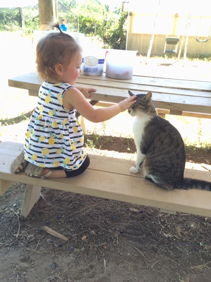 Fruit Picking P and Cat.jpg