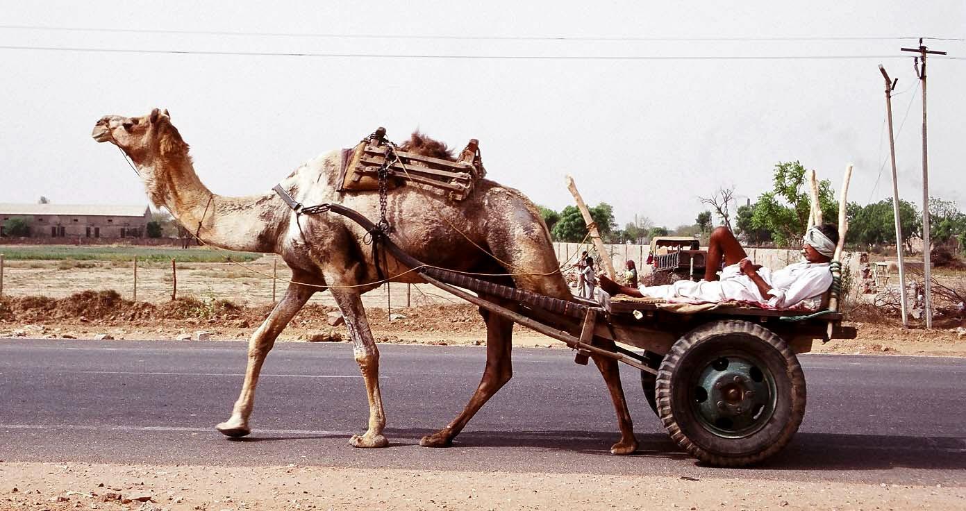 Road scene on the way to Fatehpur Sikri