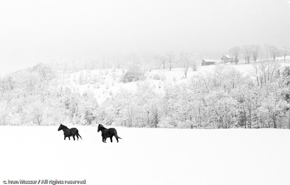 Winter Horses.  Pittsfield, VT