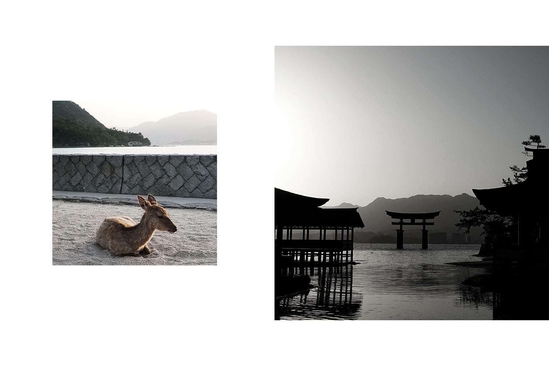 Left: Deer. Right: Grand Torii Gate during sunset.