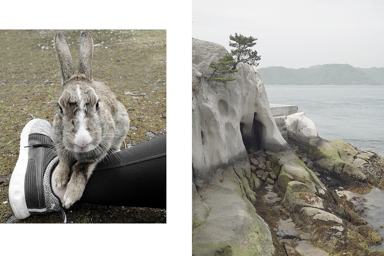 Left: wild rabbit. Right: Ocean view from Okinoshima Island.