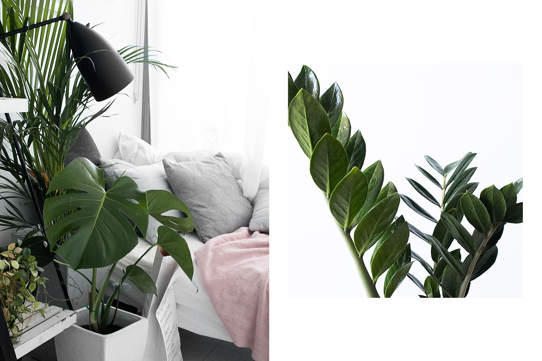 Left: golden cane palm, monstera deliciosa, Right: ZZ plant