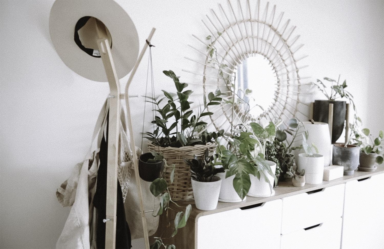 5 Easy House Plants For Beginners Rachel Aust