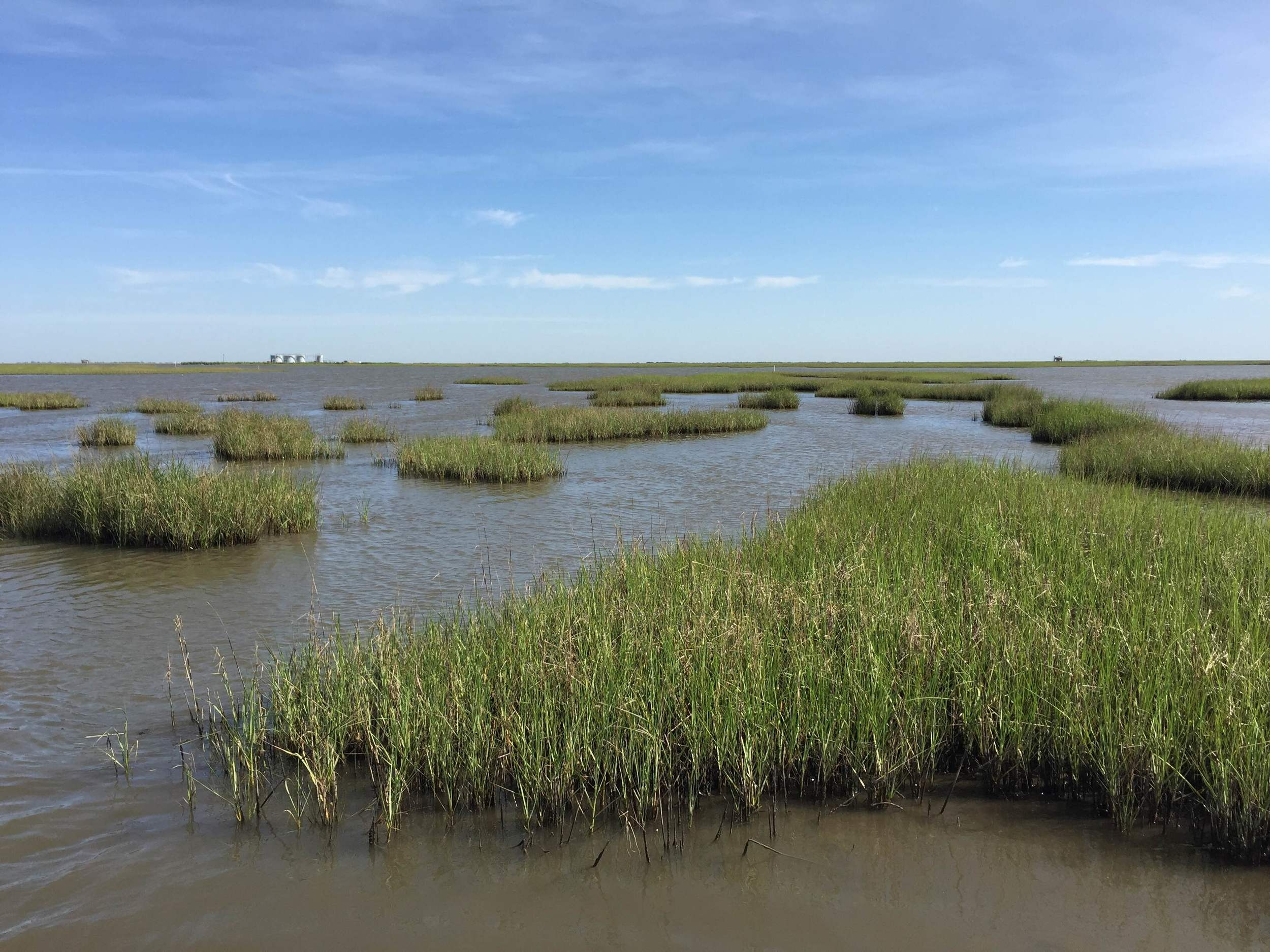 Fragmented smooth cordgrass ( Spartina alterniflora ) in Terrebonne Bay, LA
