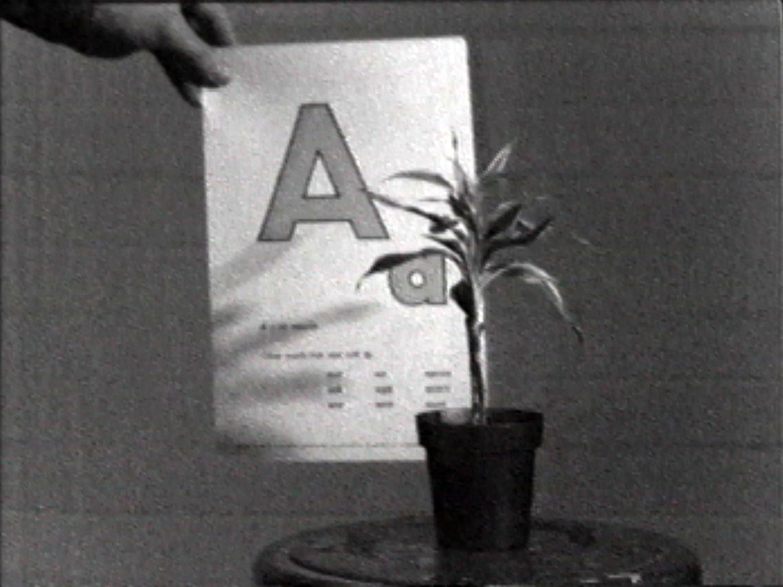Teaching a Plant the Alphabet , 1972 18:40 min, b&w, sound  ©John Baldessari. Distributed by  EAI .