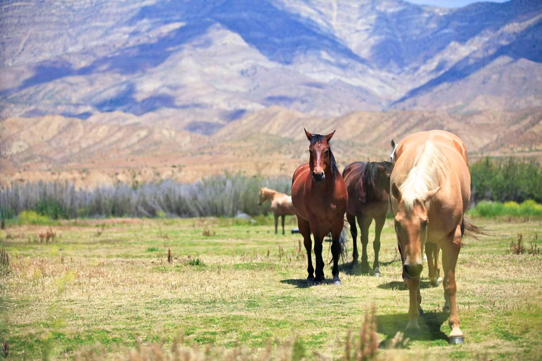 20110528-Horses A 01.jpg