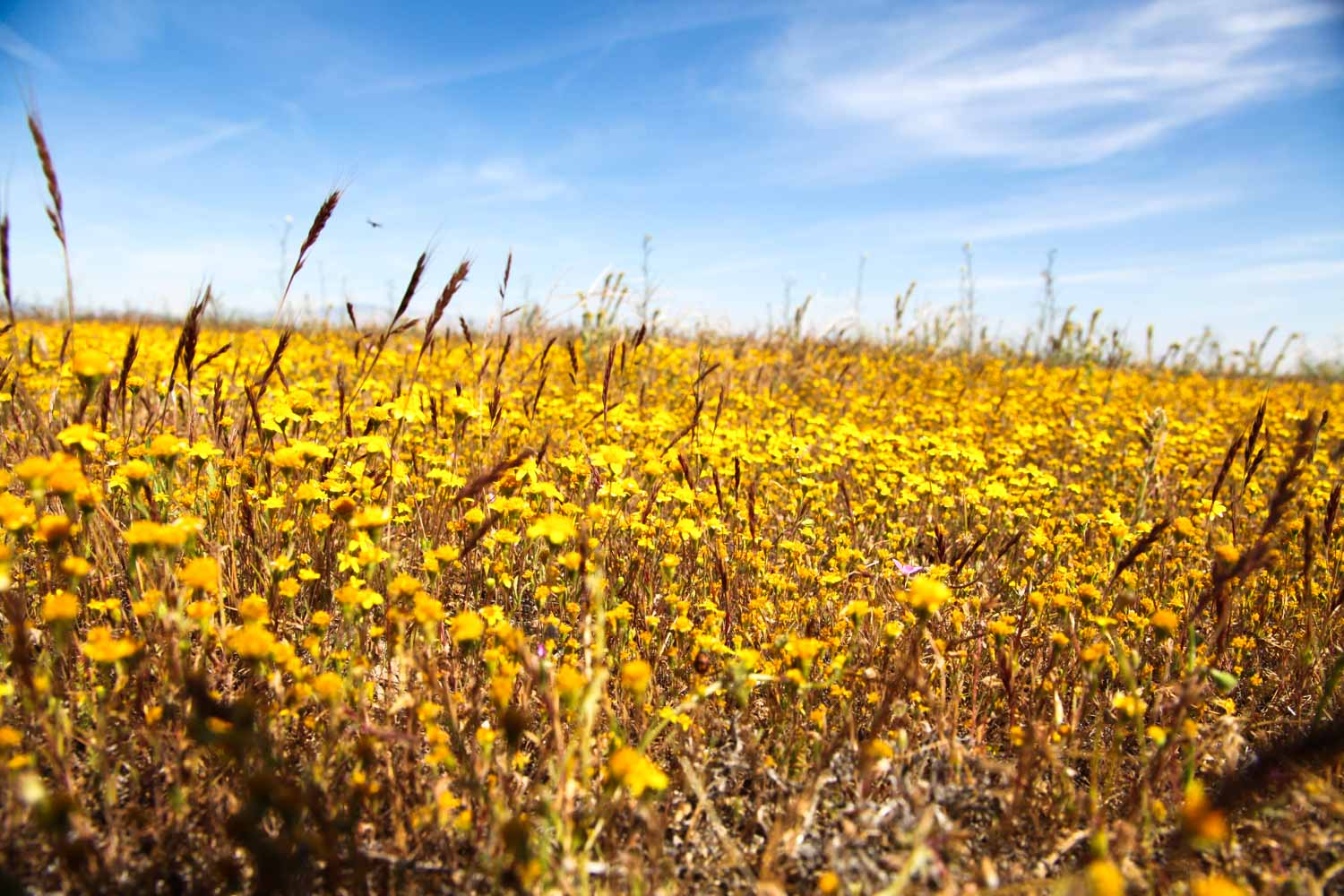20120917-Yellow Flower And Sky A.jpg